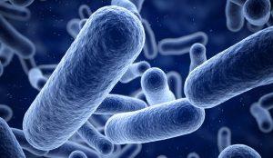 soñar con bacterias