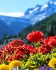 ¿Qué significa soñar con Primavera?