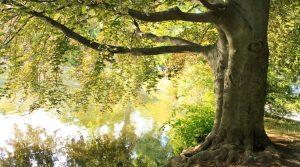 soñar que Estoy Arriba de un Árbol