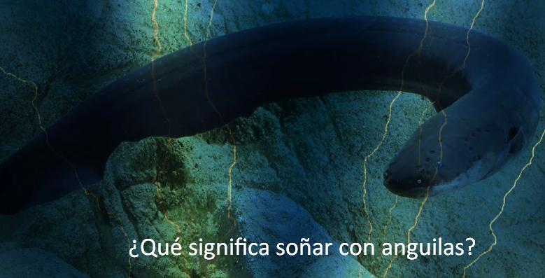 Qué significa soñar con anguilas