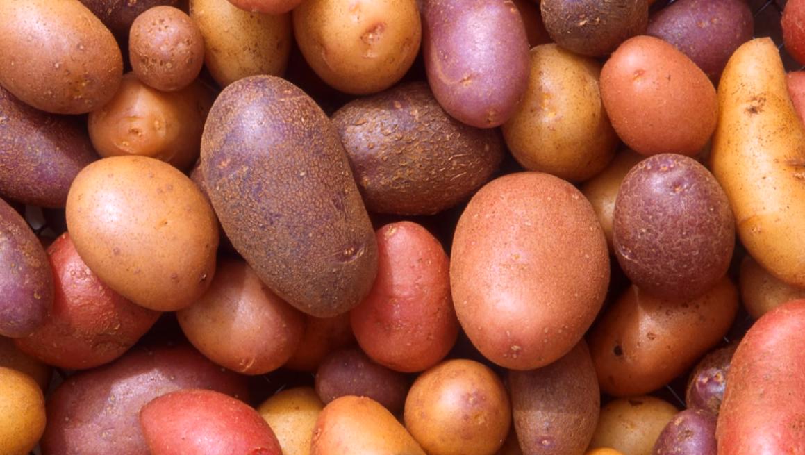 variantes de la patata