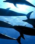 Soñar con un delfín ¿qué significa?