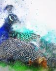 Soñar con un pavo real ¿qué significa?