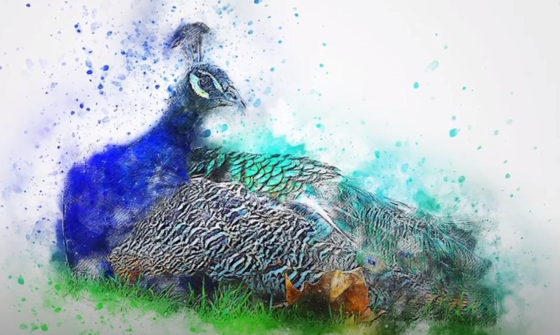 Soñar con un pavo real