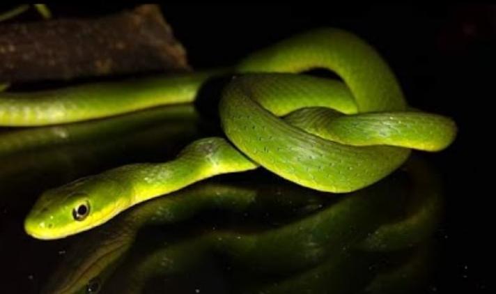 soñar con ver una serpiente verde